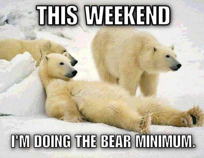bear_polar_relaxing-660x510