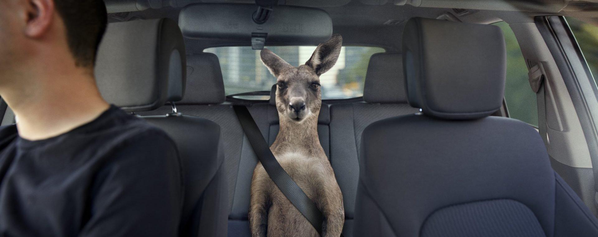 qantas_uber_kangaroo_kredmo_blog